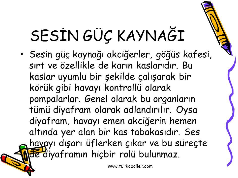 www.turkceciler.com SESİN GÜÇ KAYNAĞI •Sesin güç kaynağı akciğerler, göğüs kafesi, sırt ve özellikle de karın kaslarıdır. Bu kaslar uyumlu bir şekilde