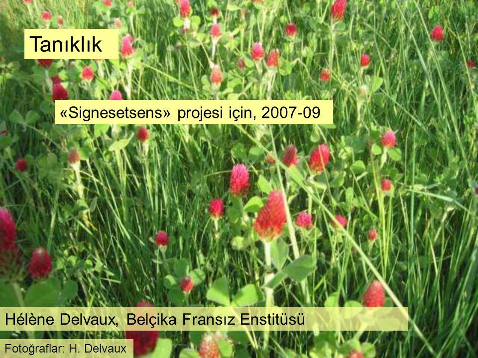 Tanıklık «Signesetsens» projesi için, 2007-09 Hélène Delvaux, Belçika Fransız Enstitüsü Fotoğraflar: H. Delvaux