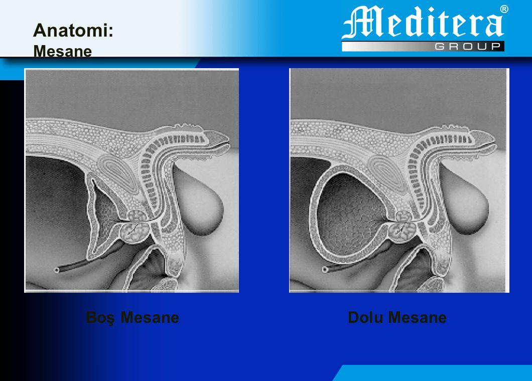 Boş MesaneDolu Mesane Anatomi: Mesane