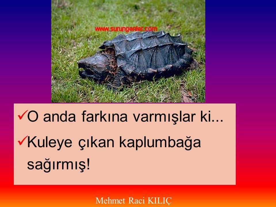  O anda farkına varmışlar ki...  Kuleye çıkan kaplumbağa sağırmış! Mehmet Raci KILIÇ