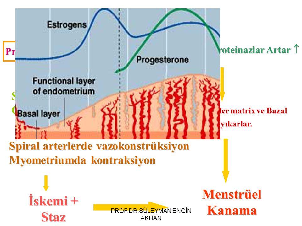 Progesteron ve Östrojen Düşer  Stromal hüc: Endotelin-1 Glandüler hüc: PG-F2  Spiral arterlerde vazokonstrüksiyon Myometriumda kontraksiyon İskemi + Staz Metalloproteinazlar Artar  Ekstraselüler matrix ve Bazal Membranı yıkarlar.