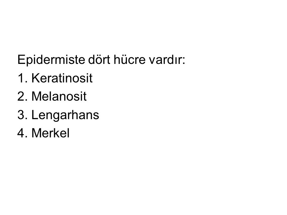 Epidermiste dört hücre vardır: 1. Keratinosit 2. Melanosit 3. Lengarhans 4. Merkel