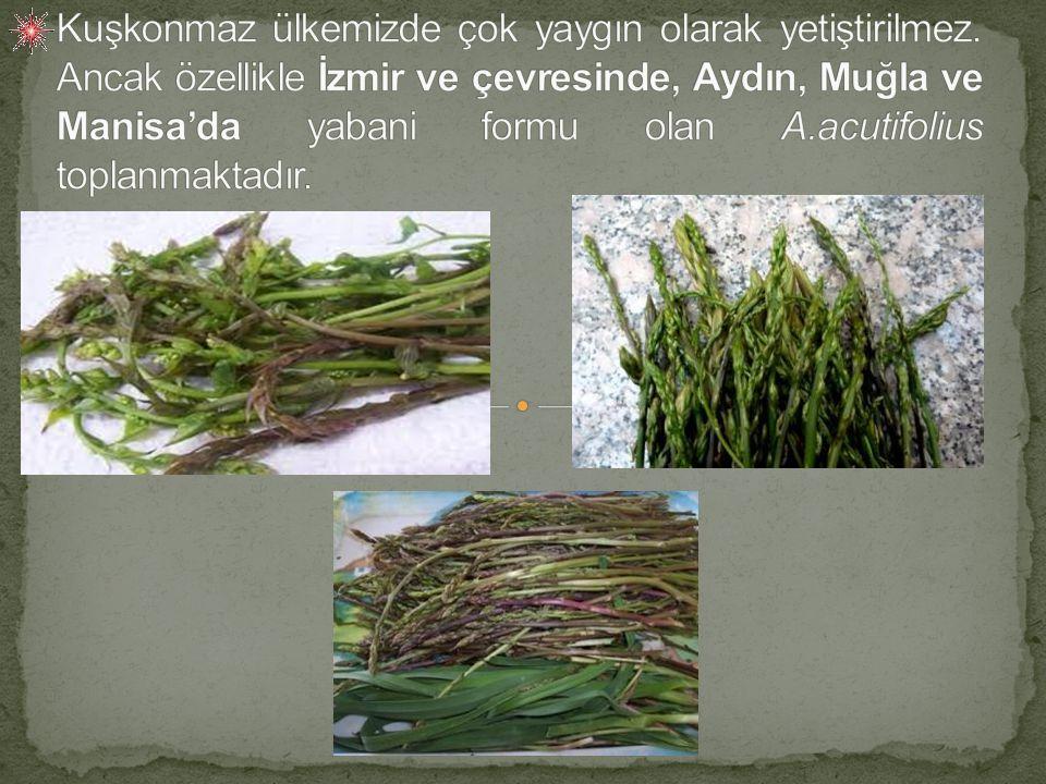 Toprak üstü organları tek yıllık olmakla birlikte, kuşkonmaz çok yıllık bir bitkidir.