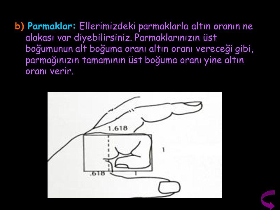 b) Parmaklar: Ellerimizdeki parmaklarla altın oranın ne alakası var diyebilirsiniz. Parmaklarınızın üst boğumunun alt boğuma oranı altın oranı vereceğ