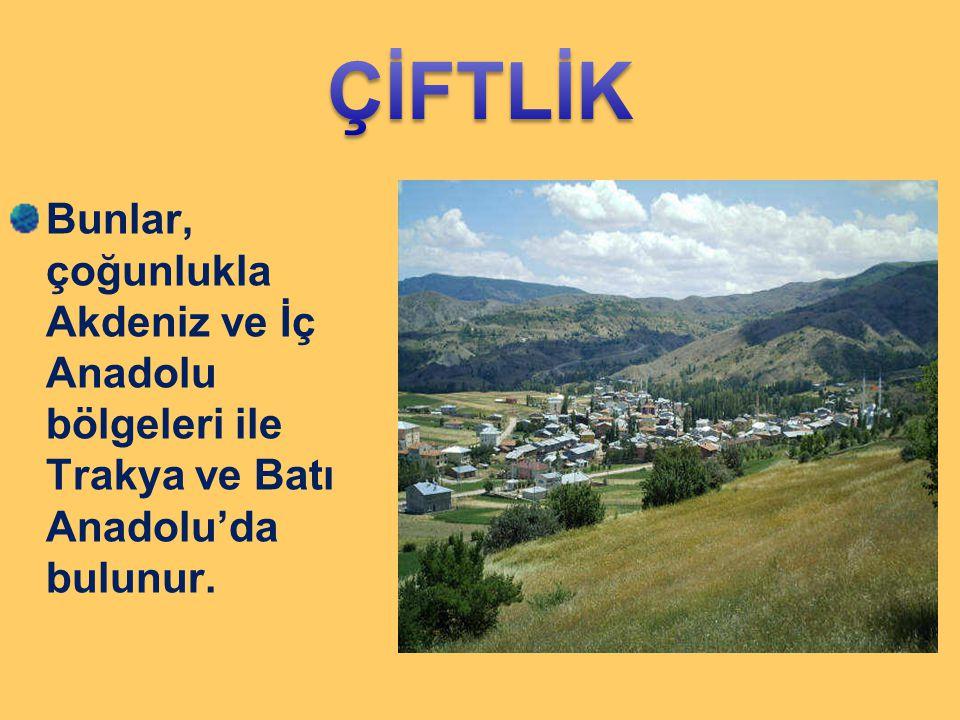 Bunlar, çoğunlukla Akdeniz ve İç Anadolu bölgeleri ile Trakya ve Batı Anadolu'da bulunur.