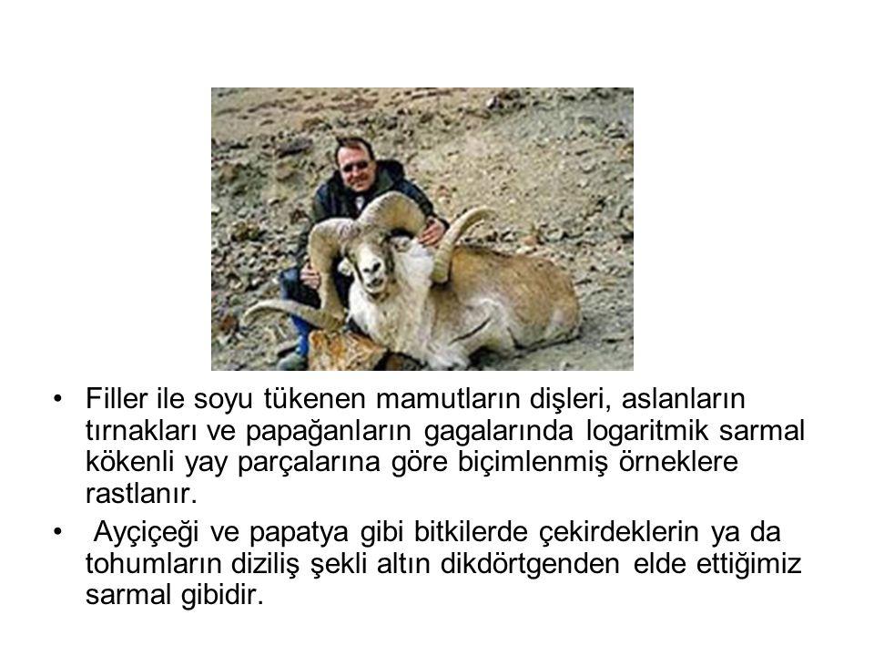 •Filler ile soyu tükenen mamutların dişleri, aslanların tırnakları ve papağanların gagalarında logaritmik sarmal kökenli yay parçalarına göre biçimlen