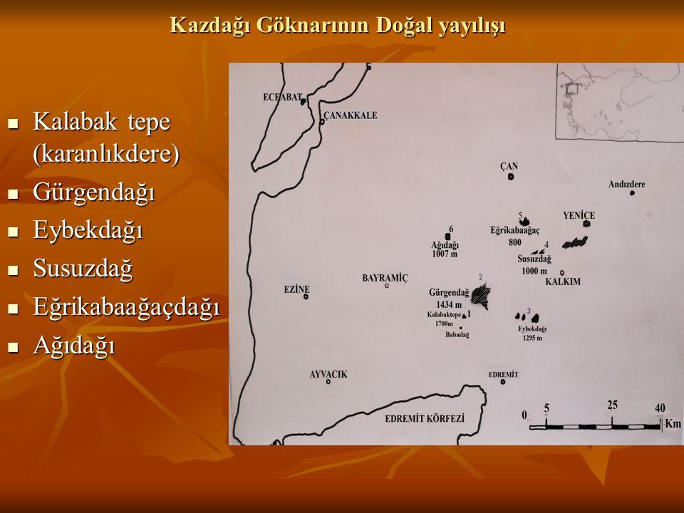 Sonuçlar ve Öneriler  Kazdağı Göknarı, Toros Göknarına kıyasla daha alçak yüksekliklerden (550 m) başlayıp, çok yükseklere çıkmamaktadır (1600m).