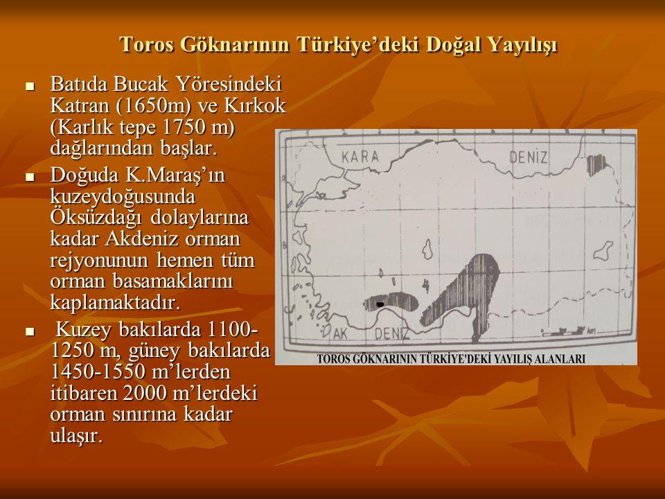 Toros Göknarının Türkiye'deki Doğal Yayılışı  Batıda Bucak Yöresindeki Katran (1650m) ve Kırkok (Karlık tepe 1750 m) dağlarından başlar.  Doğuda K.M