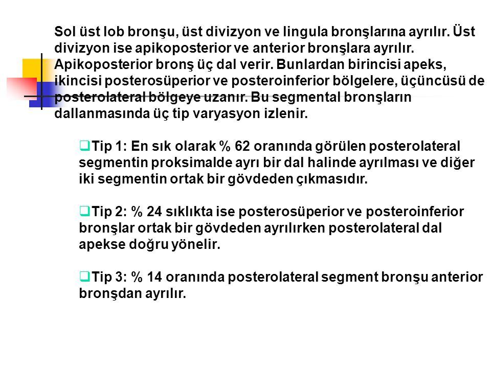 Sol üst lob bronşu, üst divizyon ve lingula bronşlarına ayrılır. Üst divizyon ise apikoposterior ve anterior bronşlara ayrılır. Apikoposterior bronş ü