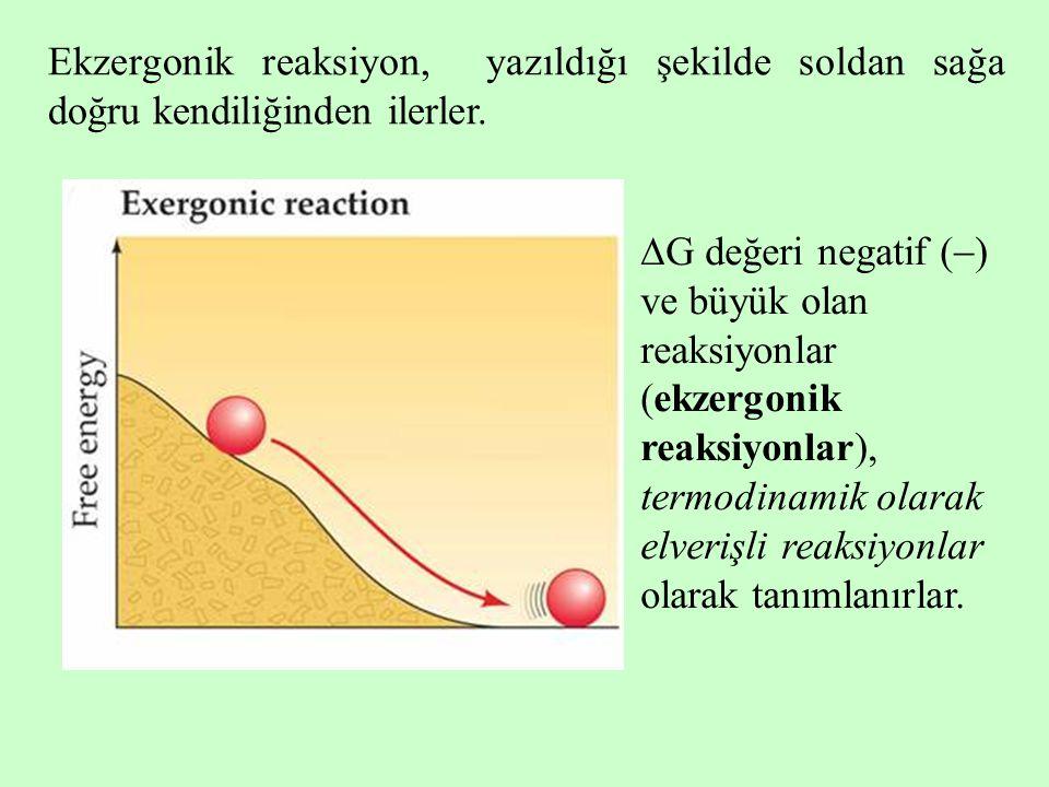 Ekzergonik reaksiyon, yazıldığı şekilde soldan sağa doğru kendiliğinden ilerler.  G değeri negatif (  ) ve büyük olan reaksiyonlar (ekzergonik reaks