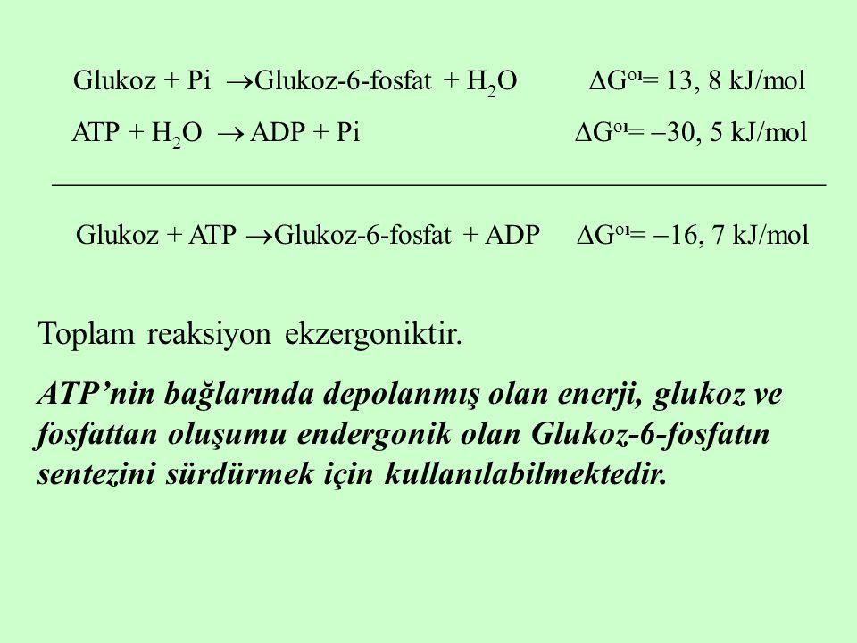 Glukoz + Pi  Glukoz-6-fosfat + H 2 O  G oı = 13, 8 kJ/mol ATP + H 2 O  ADP + Pi  G oı =  30, 5 kJ/mol  Glukoz + ATP 