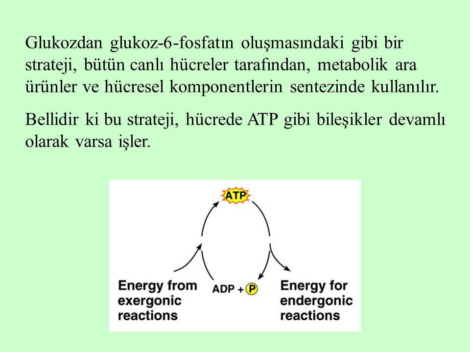 Glukozdan glukoz-6-fosfatın oluşmasındaki gibi bir strateji, bütün canlı hücreler tarafından, metabolik ara ürünler ve hücresel komponentlerin sentezi