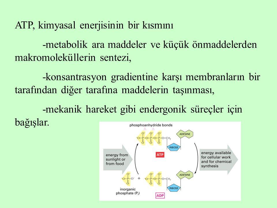 ATP, kimyasal enerjisinin bir kısmını -metabolik ara maddeler ve küçük önmaddelerden makromoleküllerin sentezi, -konsantrasyon gradientine karşı membr