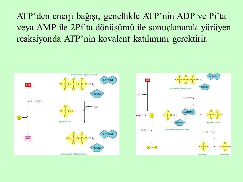 ATP'den enerji bağışı, genellikle ATP'nin ADP ve Pi'ta veya AMP ile 2Pi'ta dönüşümü ile sonuçlanarak yürüyen reaksiyonda ATP'nin kovalent katılımını g