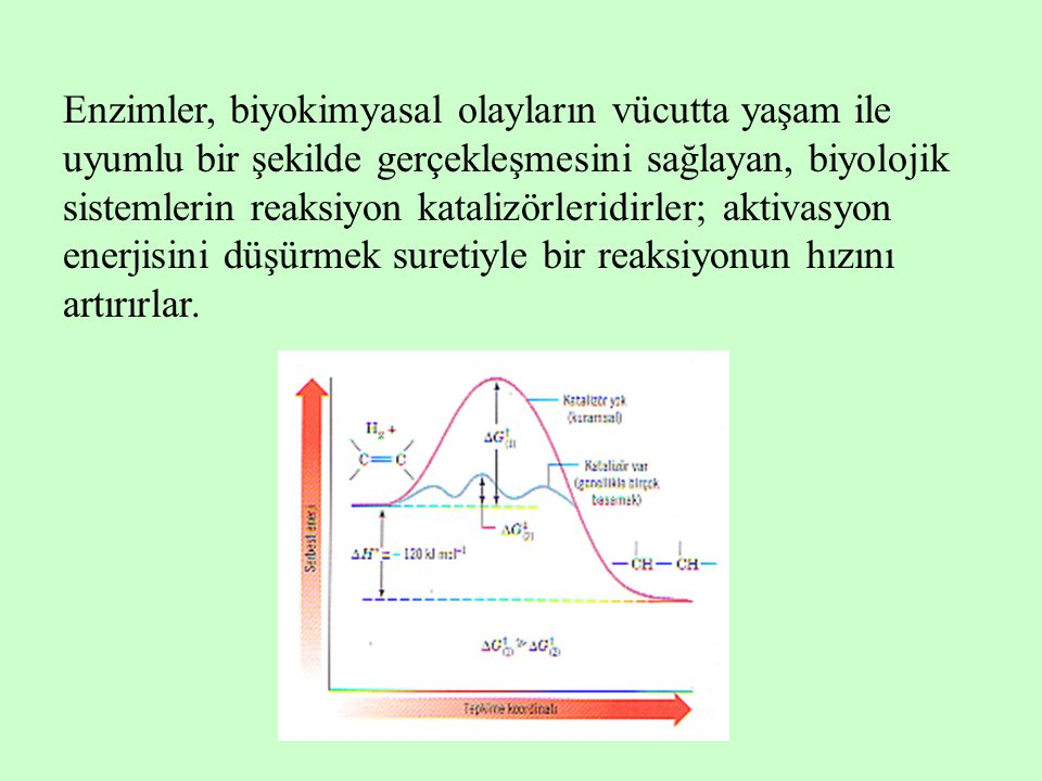 Enzimler, biyokimyasal olayların vücutta yaşam ile uyumlu bir şekilde gerçekleşmesini sağlayan, biyolojik sistemlerin reaksiyon katalizörleridirler; a