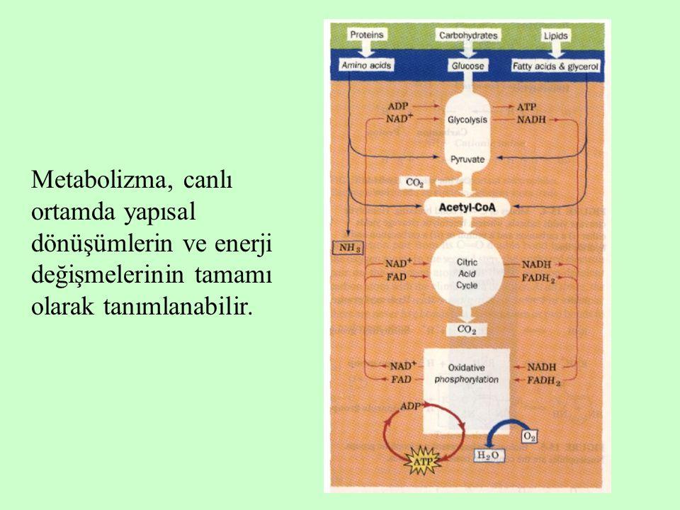 Metabolizma, canlı ortamda yapısal dönüşümlerin ve enerji değişmelerinin tamamı olarak tanımlanabilir.