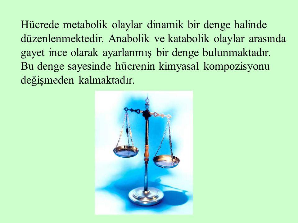 Hücrede metabolik olaylar dinamik bir denge halinde düzenlenmektedir. Anabolik ve katabolik olaylar arasında gayet ince olarak ayarlanmış bir denge bu