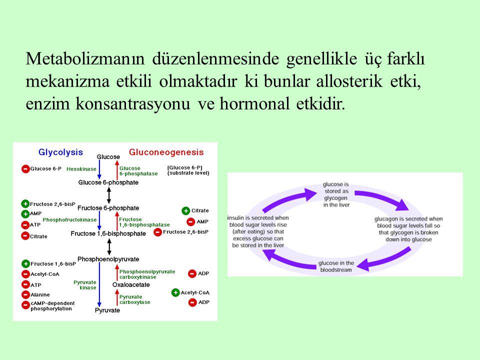 Metabolizmanın düzenlenmesinde genellikle üç farklı mekanizma etkili olmaktadır ki bunlar allosterik etki, enzim konsantrasyonu ve hormonal etkidir.