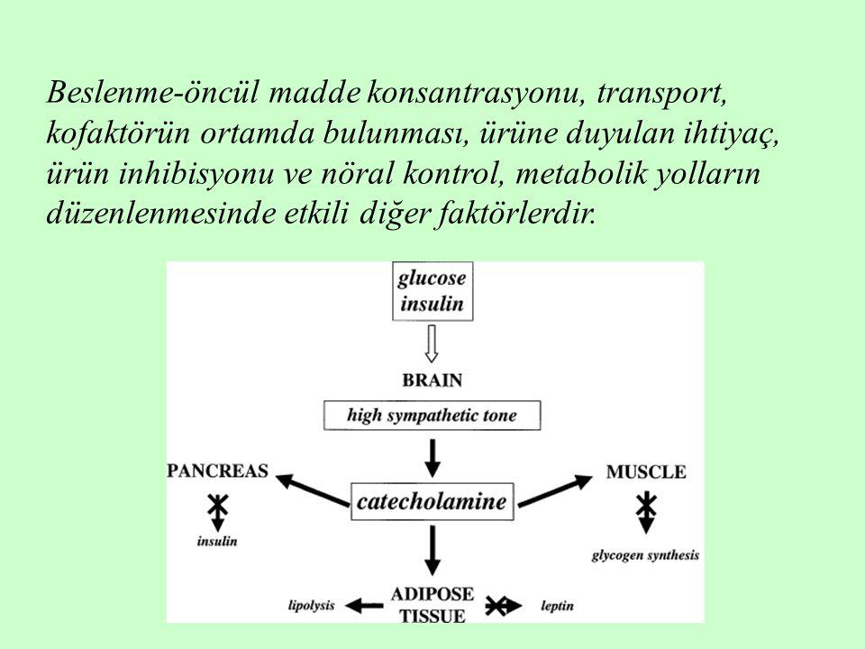 Beslenme-öncül madde konsantrasyonu, transport, kofaktörün ortamda bulunması, ürüne duyulan ihtiyaç, ürün inhibisyonu ve nöral kontrol, metabolik yoll