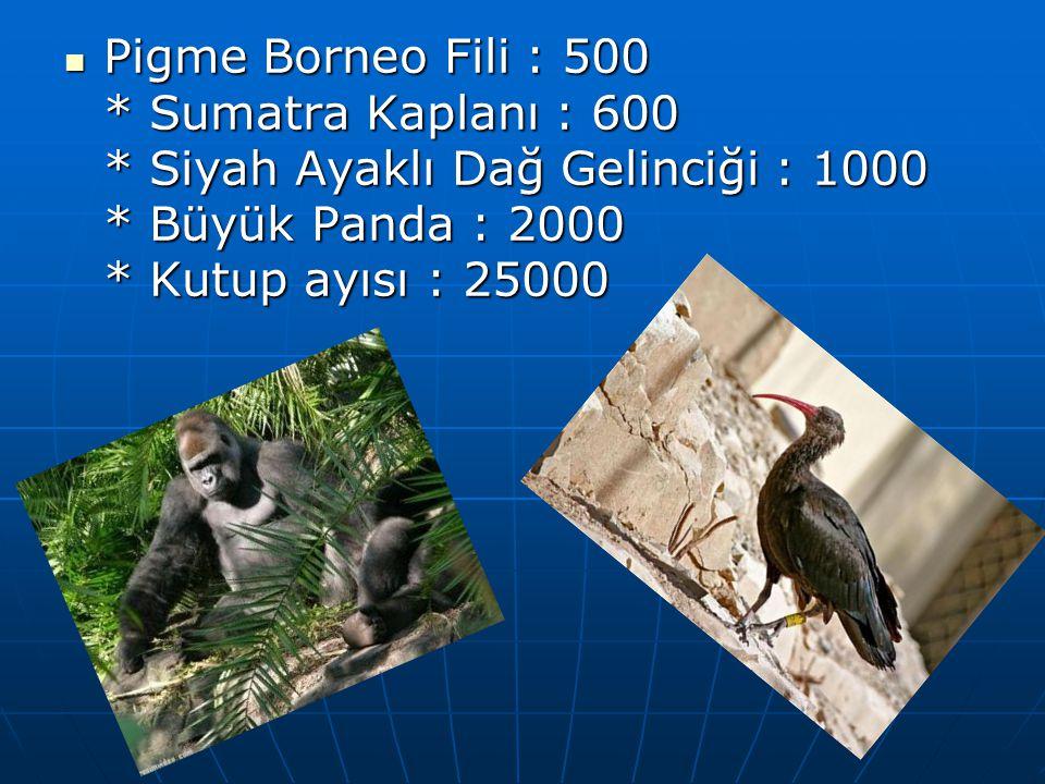  Pigme Borneo Fili : 500 * Sumatra Kaplanı : 600 * Siyah Ayaklı Dağ Gelinciği : 1000 * Büyük Panda : 2000 * Kutup ayısı : 25000