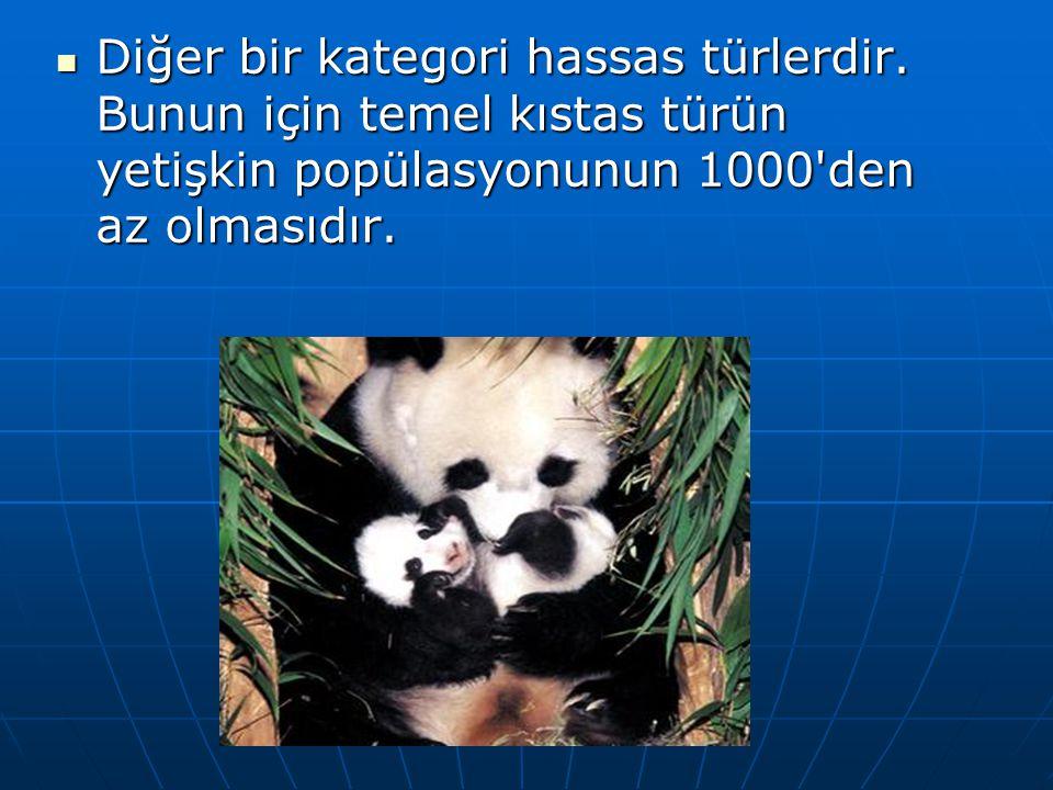  Diğer bir kategori hassas türlerdir. Bunun için temel kıstas türün yetişkin popülasyonunun 1000'den az olmasıdır.