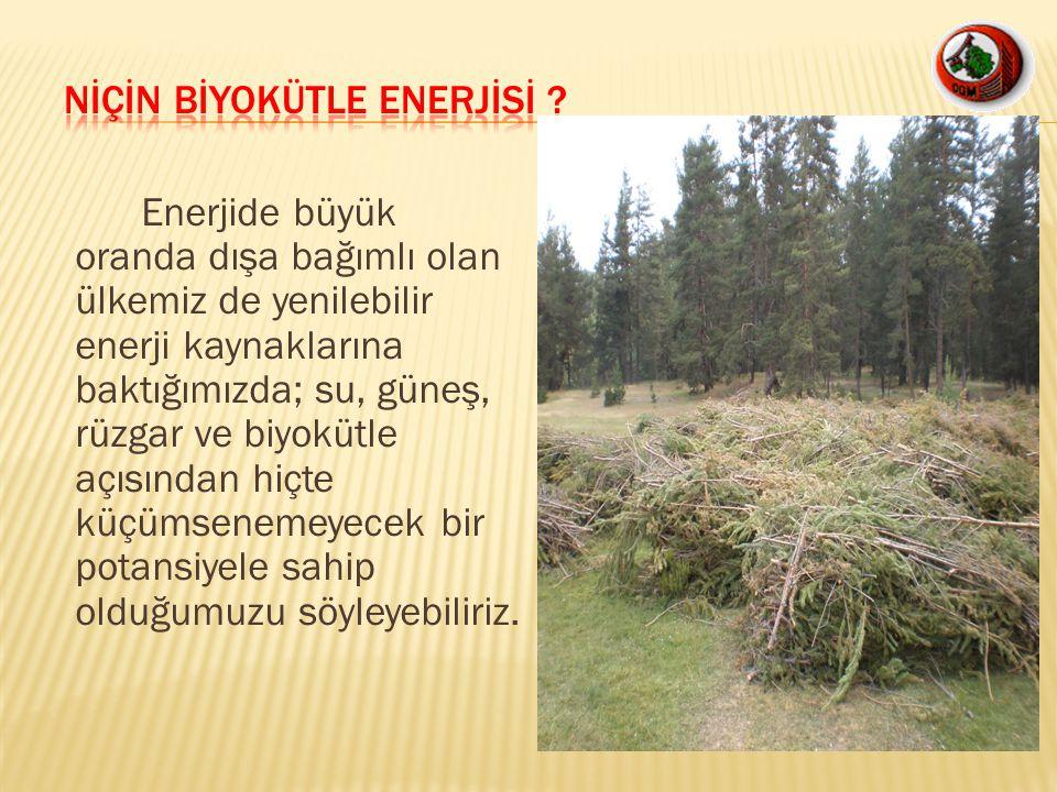 -Biyokütle olarak: Bölge müdürlüğümüz ormanlık alan açısından Türkiye ortalamasının oldukça üzerinde bir alana ve servete sahibiz.Yıllık dikili üretimimizin 1.2 milyon m3 çıkmış durumda.