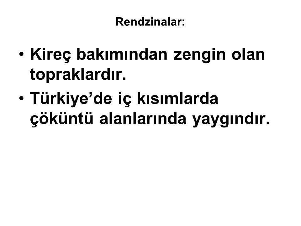 Rendzinalar: •Kireç bakımından zengin olan topraklardır. •Türkiye'de iç kısımlarda çöküntü alanlarında yaygındır.