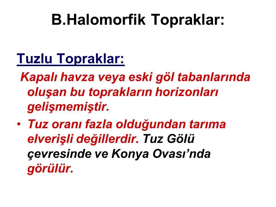 B.Halomorfik Topraklar: Tuzlu Topraklar: Kapalı havza veya eski göl tabanlarında oluşan bu toprakların horizonları gelişmemiştir. •Tuz oranı fazla old