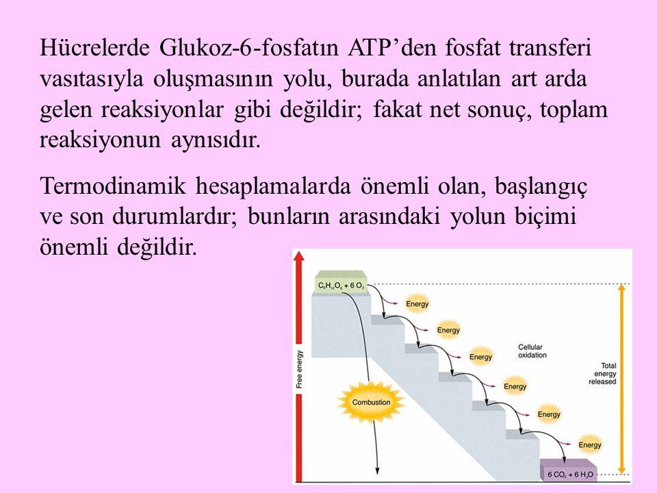 15 Hücrelerde Glukoz-6-fosfatın ATP'den fosfat transferi vasıtasıyla oluşmasının yolu, burada anlatılan art arda gelen reaksiyonlar gibi değildir; fak