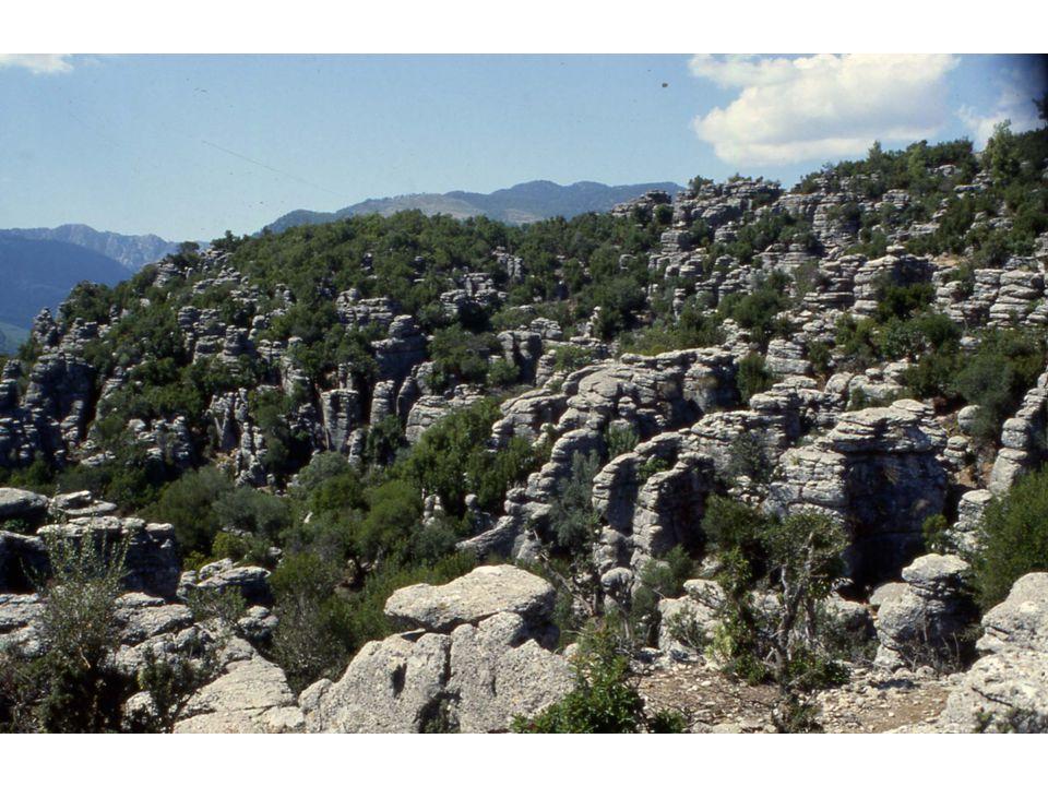 KİMYASAL TORTUL TAŞLAR Suda eriyebilen kayatuzu, kalker,jips gibi kayaların önce suda erimesi daha sonra çökelmesiyle meydana gelen taşlardır.
