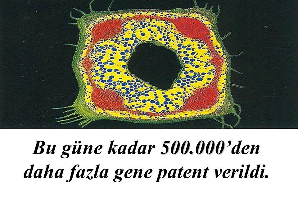 500.000 Bu güne kadar 500.000'den daha fazla gene patent verildi.