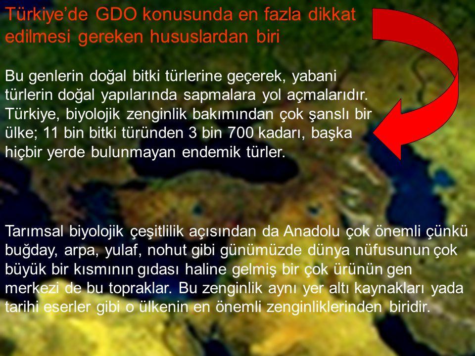 Türkiye'de GDO konusunda en fazla dikkat edilmesi gereken hususlardan biri Bu genlerin doğal bitki türlerine geçerek, yabani türlerin doğal yapılarınd