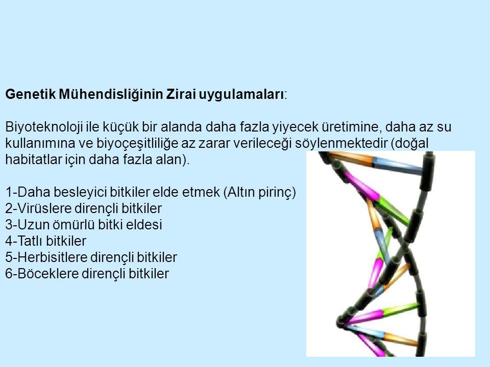 Genetik Mühendisliğinin Zirai uygulamaları: Biyoteknoloji ile küçük bir alanda daha fazla yiyecek üretimine, daha az su kullanımına ve biyoçeşitliliğe