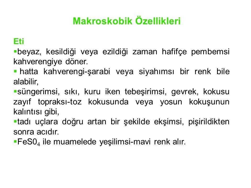 Yayılışı Artvin, Trabzon ve İstanbul civarında belirlenmiştir.
