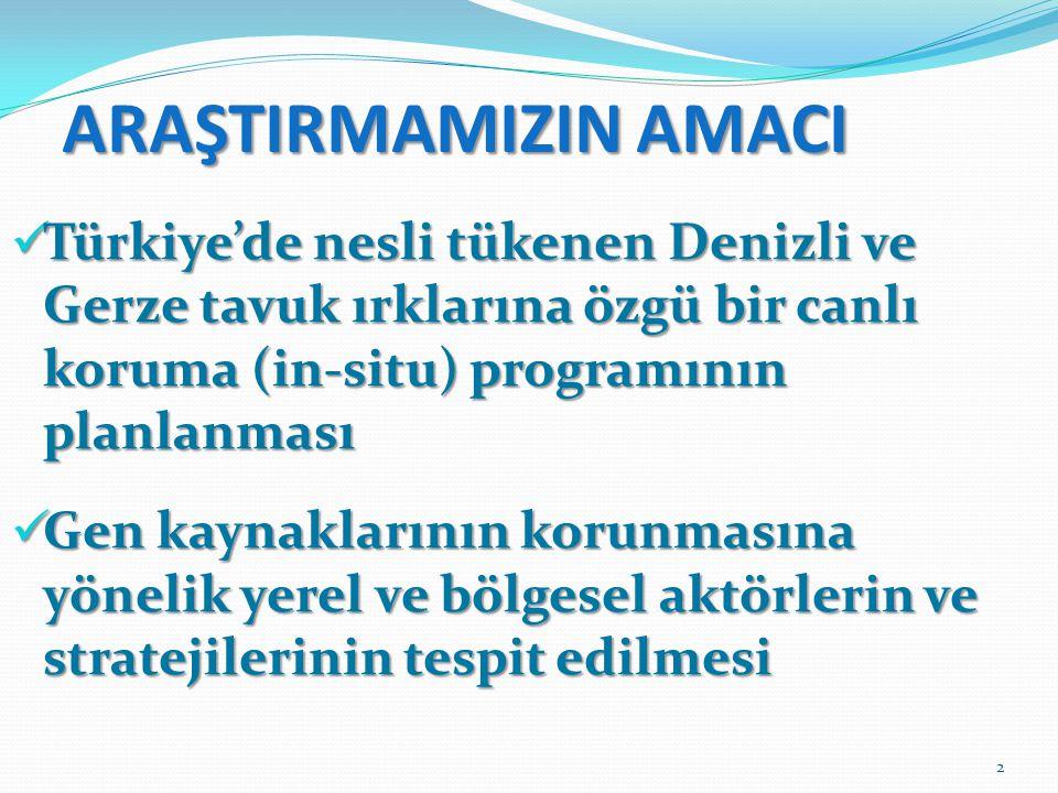 ARAŞTIRMAMIZIN AMACI  Türkiye'de nesli tükenen Denizli ve Gerze tavuk ırklarına özgü bir canlı koruma (in-situ) programının planlanması  Gen kaynakl