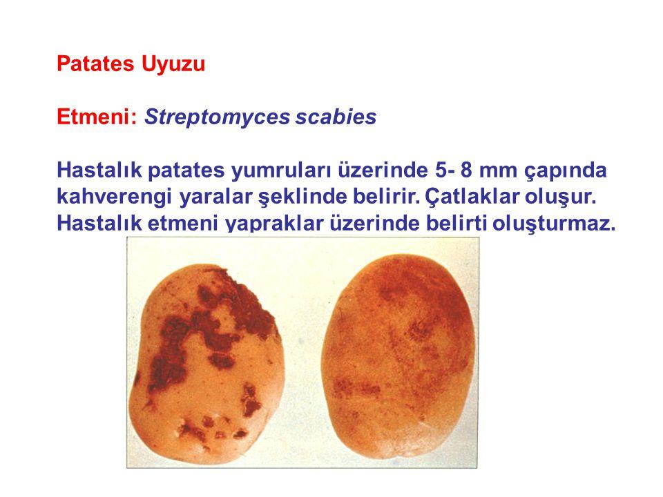 Streptomyces scabies toprakta yaşayan, patates, şeker pancarı, turplar, şalgamları, havuç gibi bitkilerin kök ve yumrularını hastalandırırlar.