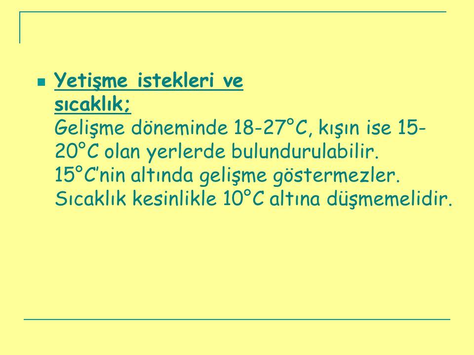  Yetişme istekleri ve sıcaklık; Gelişme döneminde 18-27°C, kışın ise 15- 20°C olan yerlerde bulundurulabilir. 15°C'nin altında gelişme göstermezler.