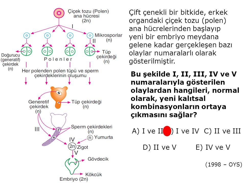 Çift çenekli bir bitkide, erkek organdaki çiçek tozu (polen) ana hücrelerinden başlayıp yeni bir embriyo meydana gelene kadar gerçekleşen bazı olaylar numaralarlı olarak gösterilmiştir.