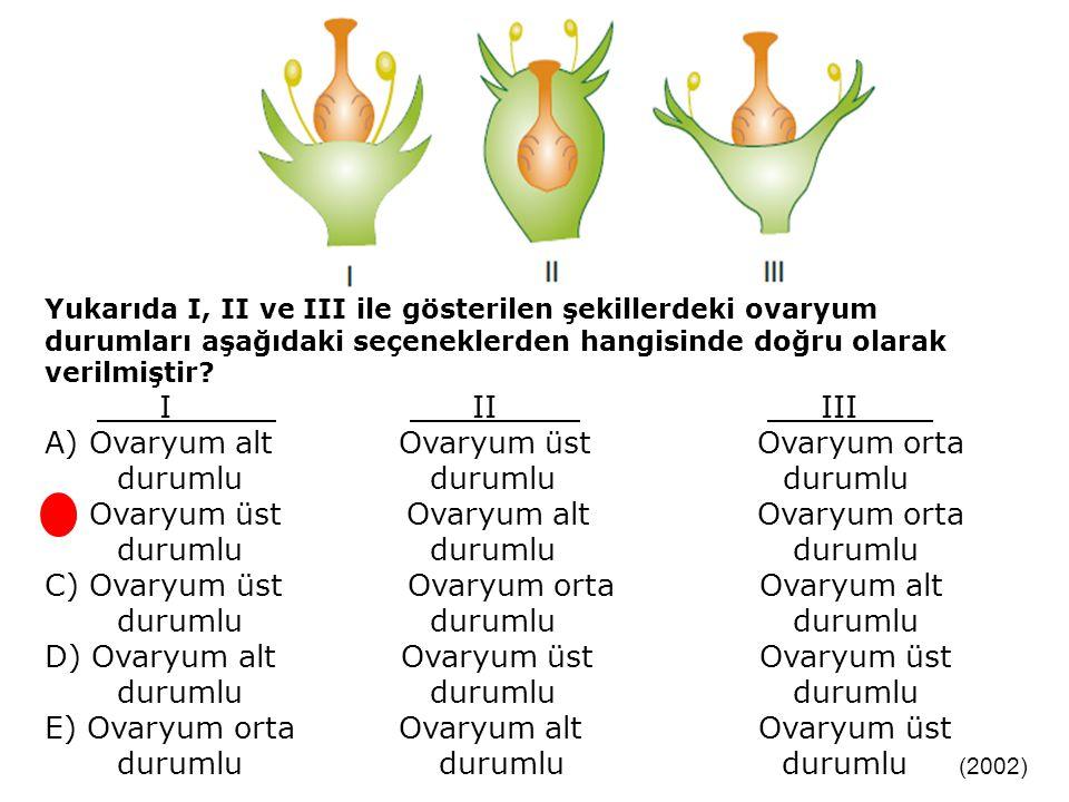 Yukarıda I, II ve III ile gösterilen şekillerdeki ovaryum durumları aşağıdaki seçeneklerden hangisinde doğru olarak verilmiştir.
