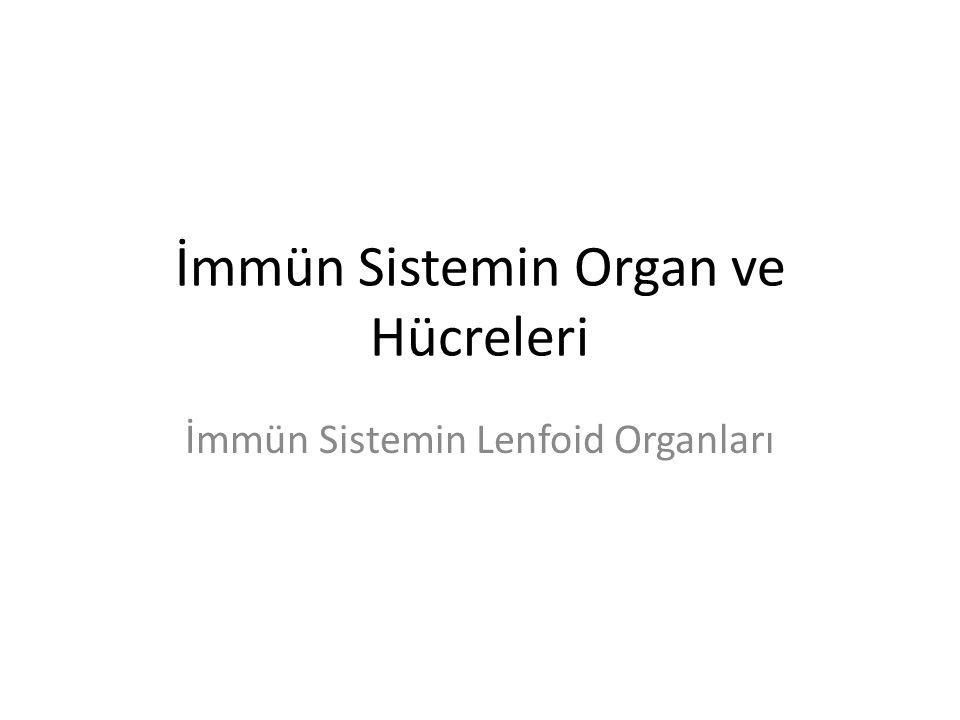 İmmün Sistemin Organ ve Hücreleri İmmün Sistemin Lenfoid Organları