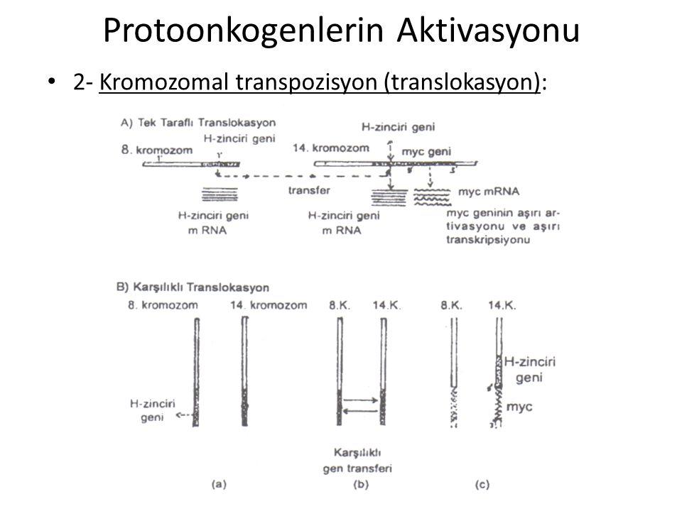 Protoonkogenlerin Aktivasyonu • 2- Kromozomal transpozisyon (translokasyon):