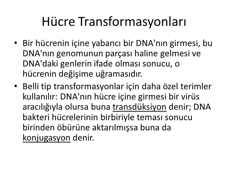Hücre Transformasyonları • Bir hücrenin içine yabancı bir DNA'nın girmesi, bu DNA'nın genomunun parçası haline gelmesi ve DNA'daki genlerin ifade olma
