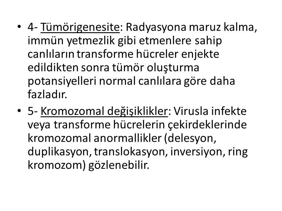 • 4- Tümörigenesite: Radyasyona maruz kalma, immün yetmezlik gibi etmenlere sahip canlıların transforme hücreler enjekte edildikten sonra tümör oluştu