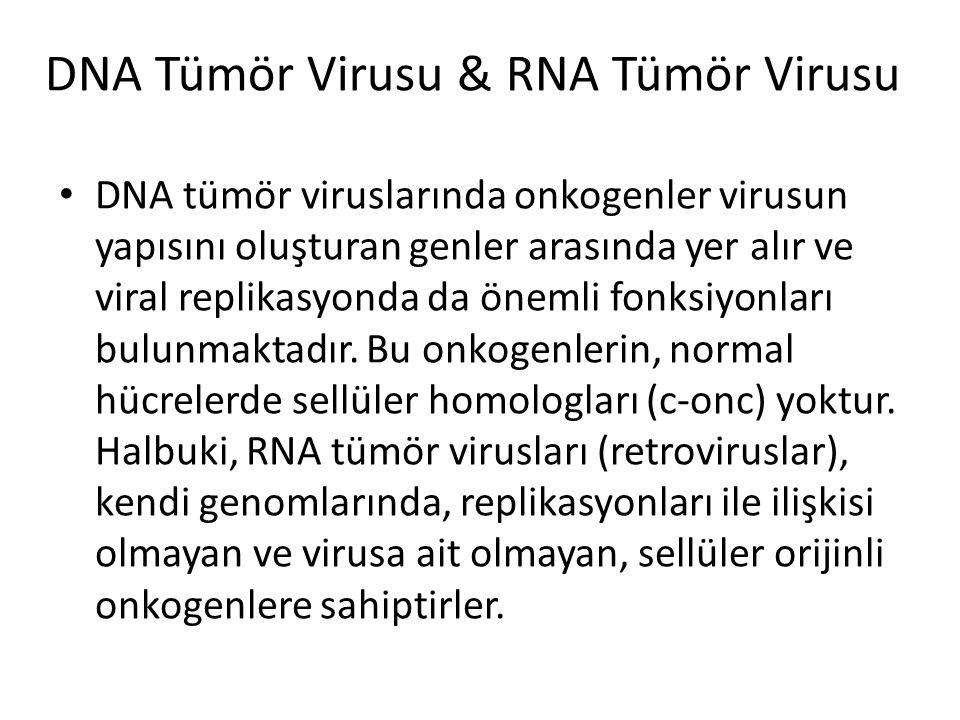 DNA Tümör Virusu & RNA Tümör Virusu • DNA tümör viruslarında onkogenler virusun yapısını oluşturan genler arasında yer alır ve viral replikasyonda da