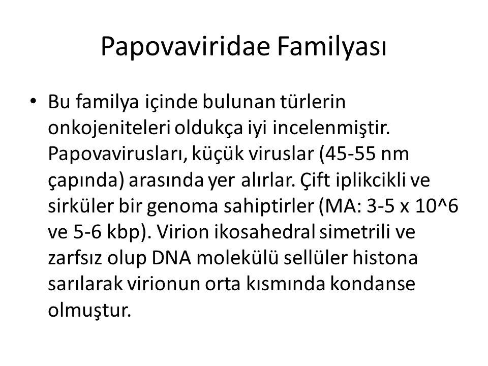 Papovaviridae Familyası • Bu familya içinde bulunan türlerin onkojeniteleri oldukça iyi incelenmiştir. Papovavirusları, küçük viruslar (45-55 nm çapın