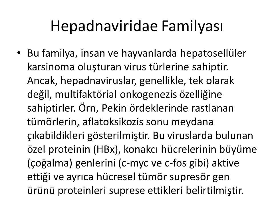 Hepadnaviridae Familyası • Bu familya, insan ve hayvanlarda hepatosellüler karsinoma oluşturan virus türlerine sahiptir. Ancak, hepadnaviruslar, genel