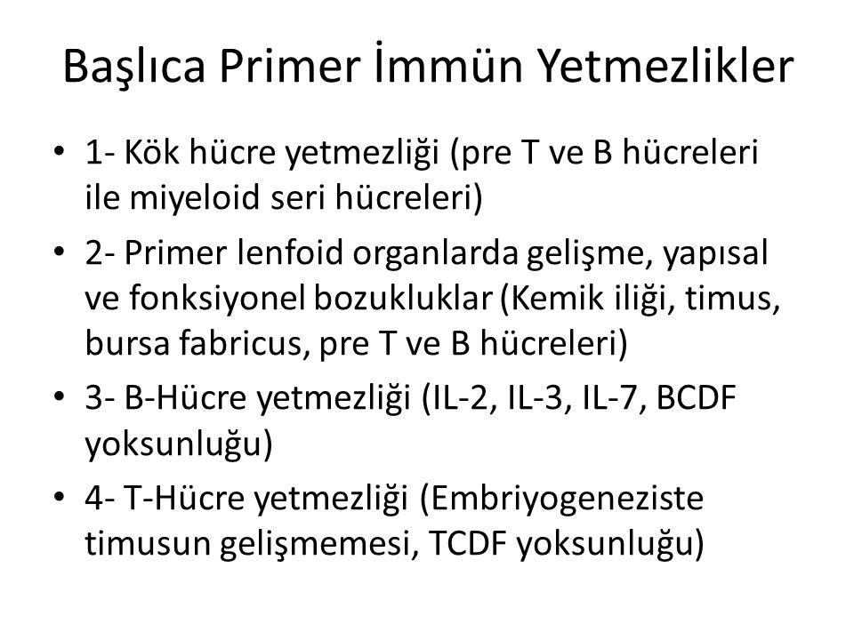 Başlıca Primer İmmün Yetmezlikler • 1- Kök hücre yetmezliği (pre T ve B hücreleri ile miyeloid seri hücreleri) • 2- Primer lenfoid organlarda gelişme,