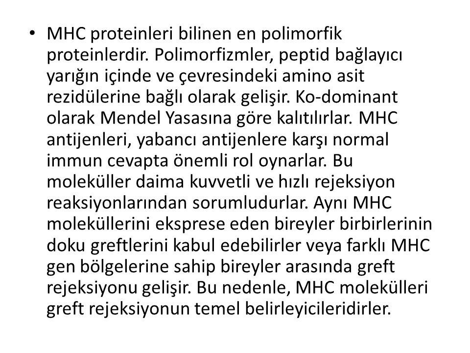 • MHC proteinleri bilinen en polimorfik proteinlerdir. Polimorfizmler, peptid bağlayıcı yarığın içinde ve çevresindeki amino asit rezidülerine bağlı o