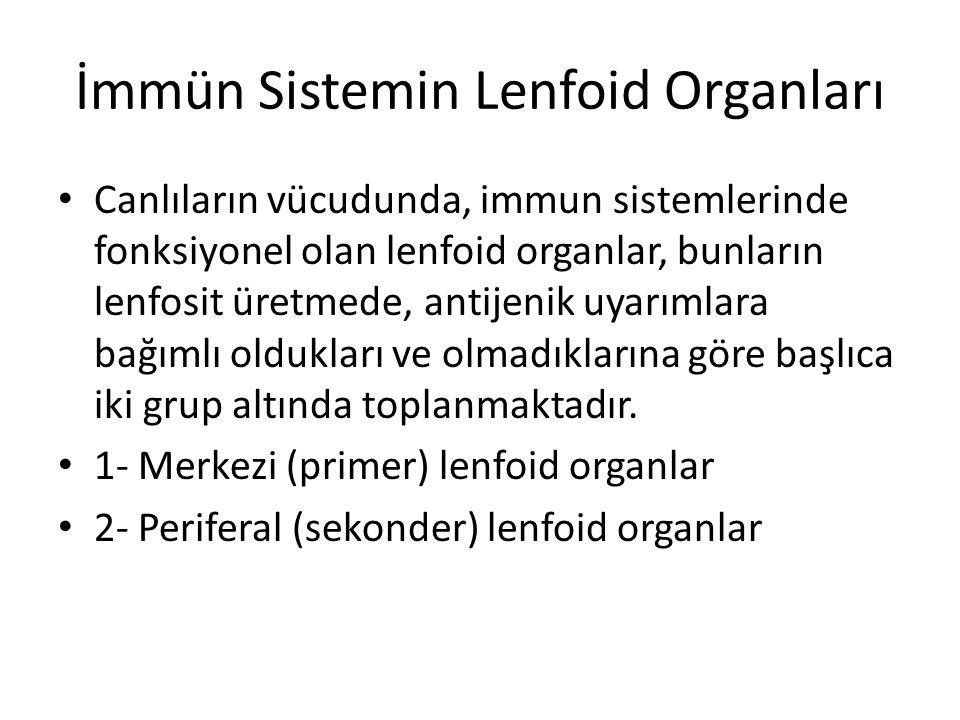 • Canlıların vücudunda, immun sistemlerinde fonksiyonel olan lenfoid organlar, bunların lenfosit üretmede, antijenik uyarımlara bağımlı oldukları ve o