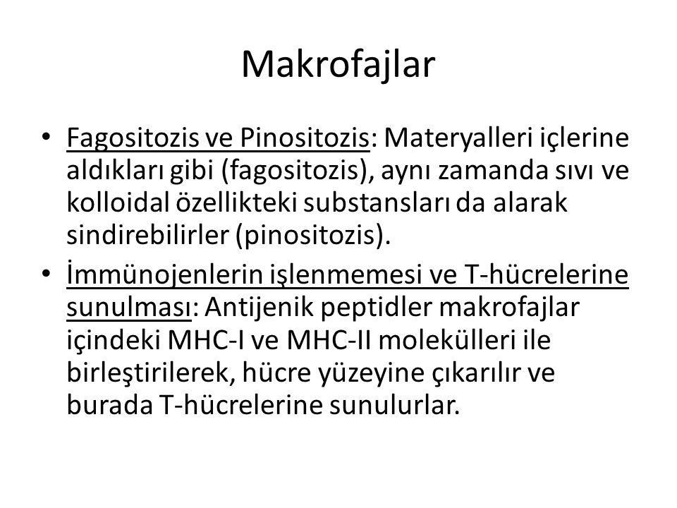 Makrofajlar • Fagositozis ve Pinositozis: Materyalleri içlerine aldıkları gibi (fagositozis), aynı zamanda sıvı ve kolloidal özellikteki substansları